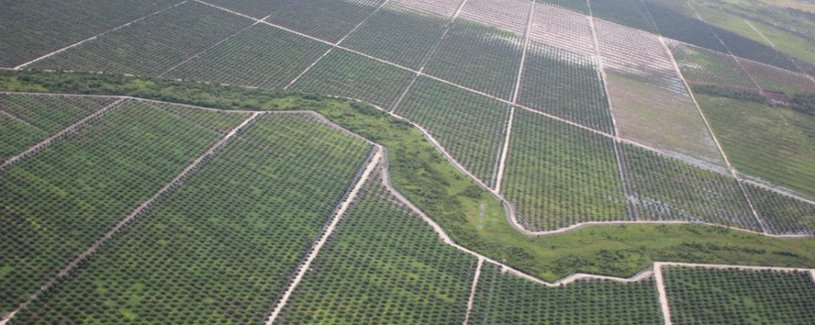 Palm Oil in Indonesia: Environmental and Social Aspects