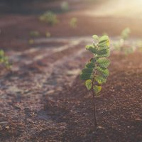 Climate Change Seed Grant Winners Announced