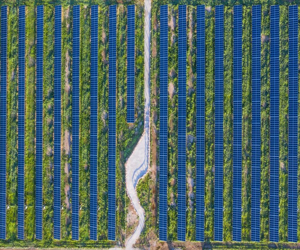solar farm with pollinator-friendly habitat