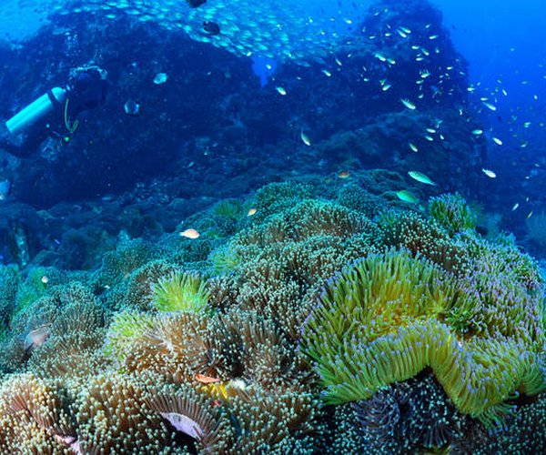 Dear Southeast Asian nations: Dive deep into marine preservation